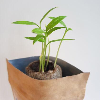 Ekologiškos verslo dovanos ( Auginimo rinkiniai )